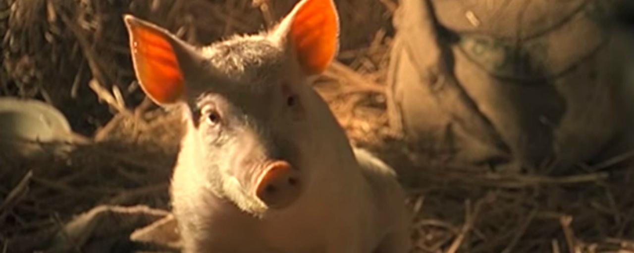 """Ce soir à la télé : on mate """"Babe, le cochon devenu berger"""", on zappe """"Chok-Dee"""""""