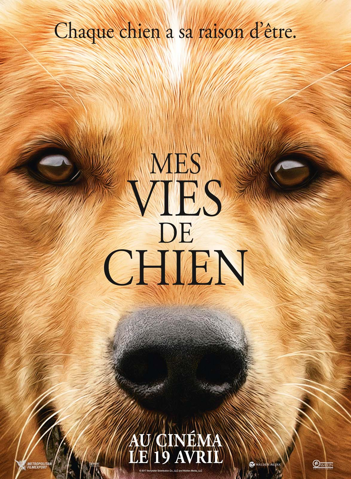 telecharger Mes vies de chien MKV Exclus 1080p