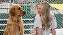 Dans les yeux d'Enzo : quel célèbre acteur US prête sa voix au chien dans le film sur Disney+ ?